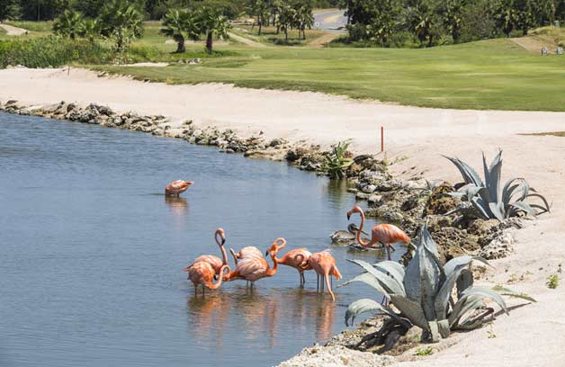 Consider the golf specials of Sunny Curacao